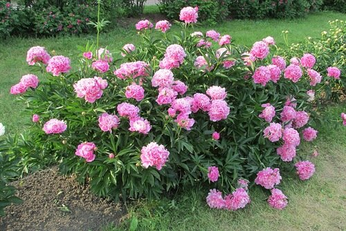 Растения, которые способны долгое время расти на одном месте и не требовать пересадки