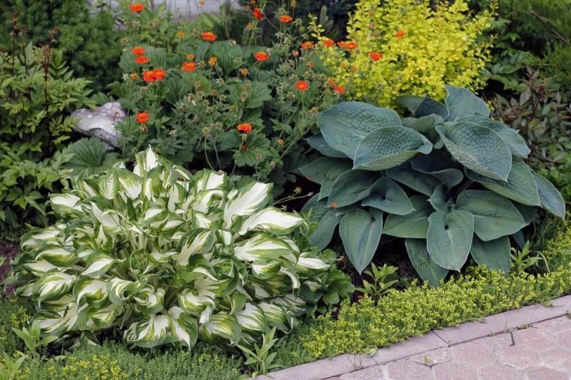 Растения с красивыми листьями: фон для цветущих цветов