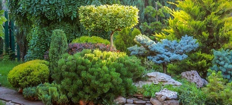 Самые распространенные ошибки при выращивании саженцев хвойных растений