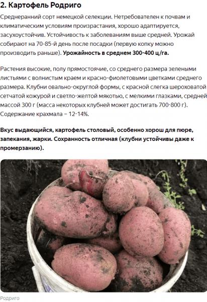 Сажаю только эти 2 лучших сорта картофеля, которые растут везде и дают до 1-го ведра плодов с куста. Урожаю завидуют все соседи