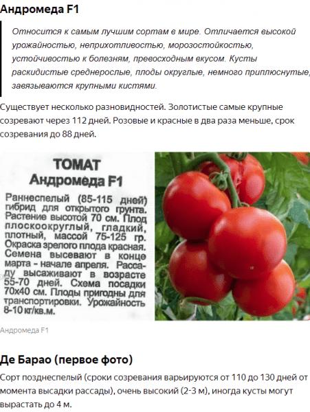 Потому что я только что согласился посадить эти 3 новых сорта томатов. Теперь я не знаю, что мне делать с урожаем.