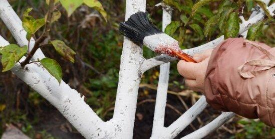 10 самых важных дел осенью в саду