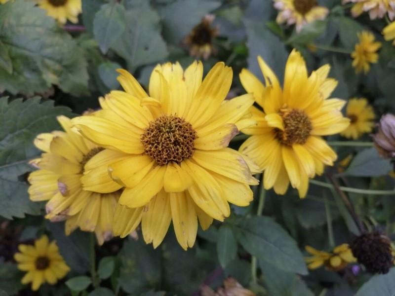 Цветы, от которых я избавилась этой осенью