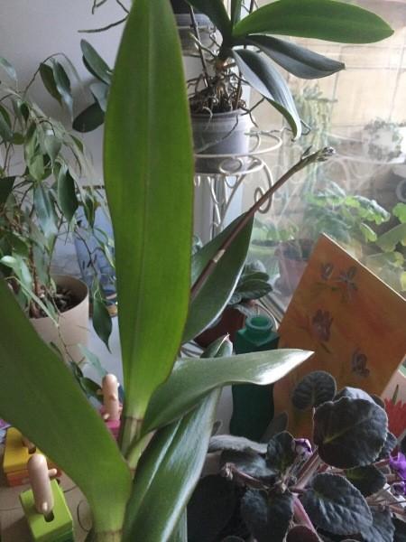 Давайте развеим миф о сложностях с орхидеями