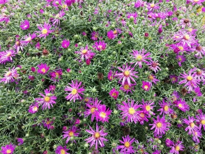Какие цветы можно не обрезать на зиму