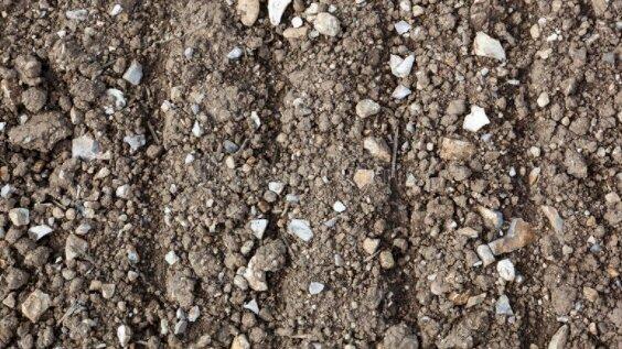Каменистая почва хорошо это или плохо. Как улучшить структуру