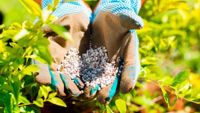 Лучшие удобрения для подкормки сада осенью