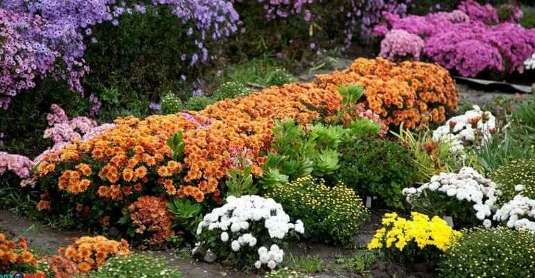Октябрь: работы в цветнике