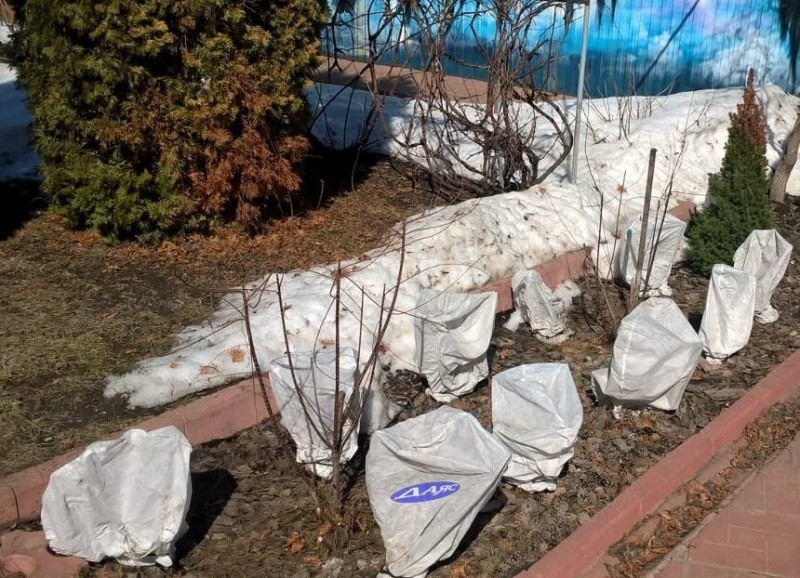 Работы в огороде во время заморозков