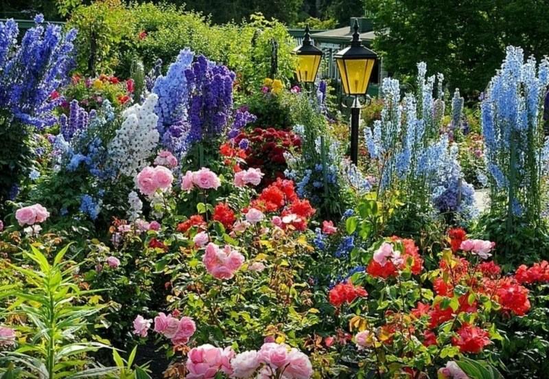 Три садовых долгожителя: красота и неприхотливость