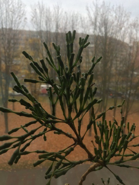 Забавное растение